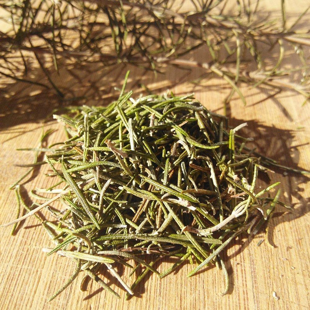 Rosmarinus officinalis  o romero, seco y listo para almacenar.