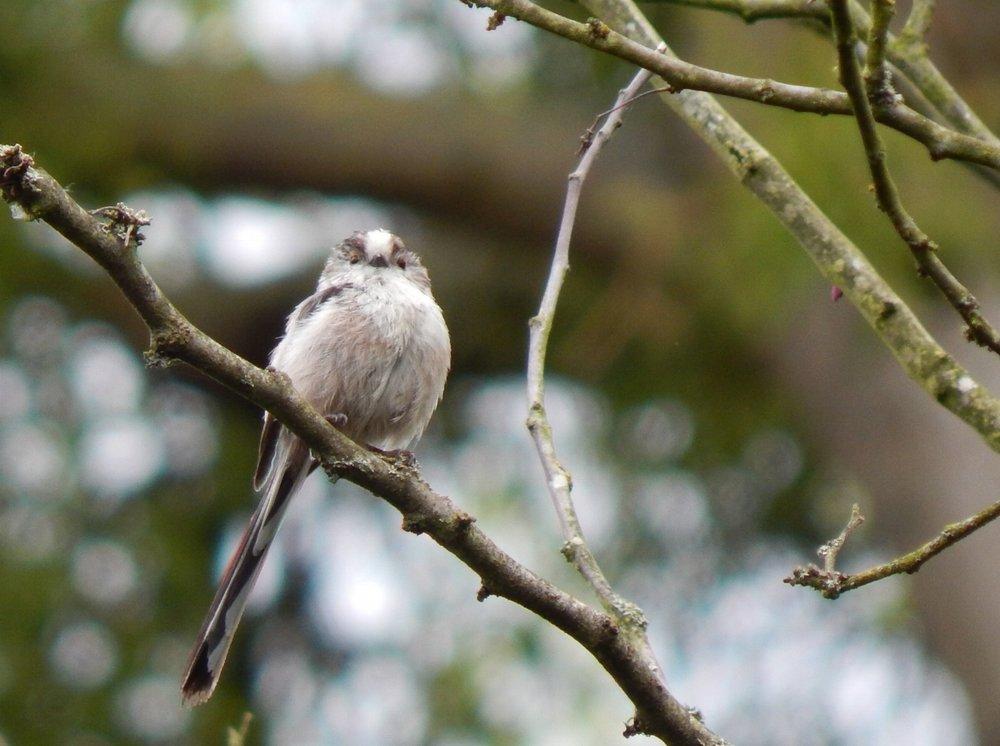 European Bird