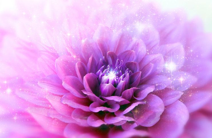 purple-crown-chakra-flower.jpg