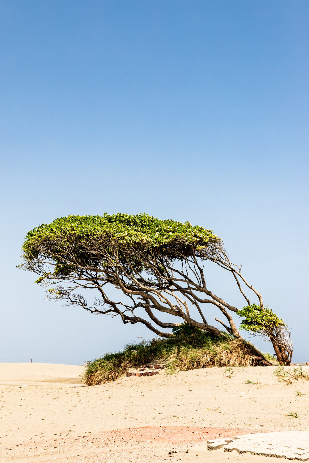 This is just a simple shot of a windswept tree on a beach I visited just outside of Tokyo. I had left bracketing on on the camera so I had an overexposed shot and I really liked the graphic quality it had so I went with it.