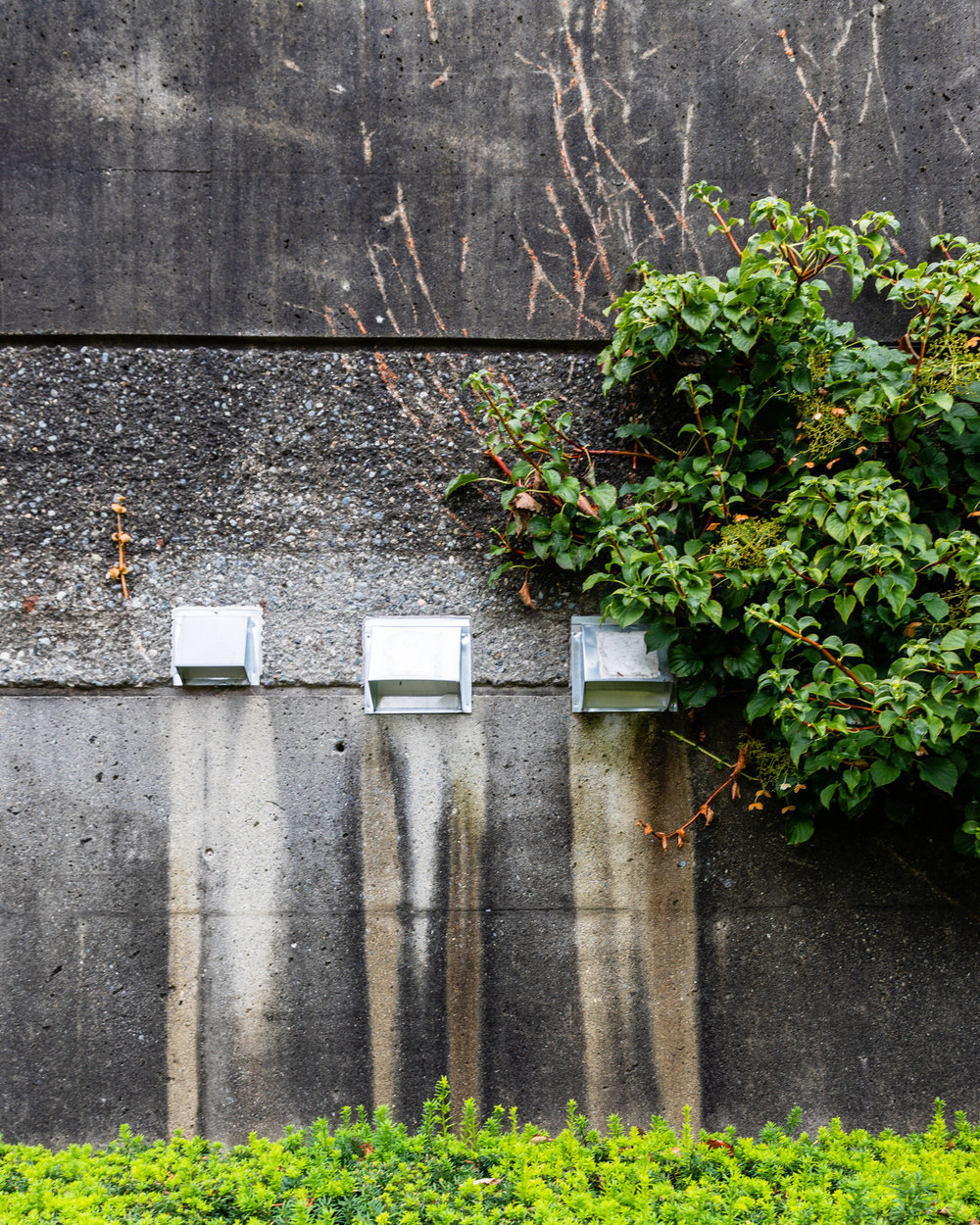 The wall was very monochrome and textured while the greenery very much neither.