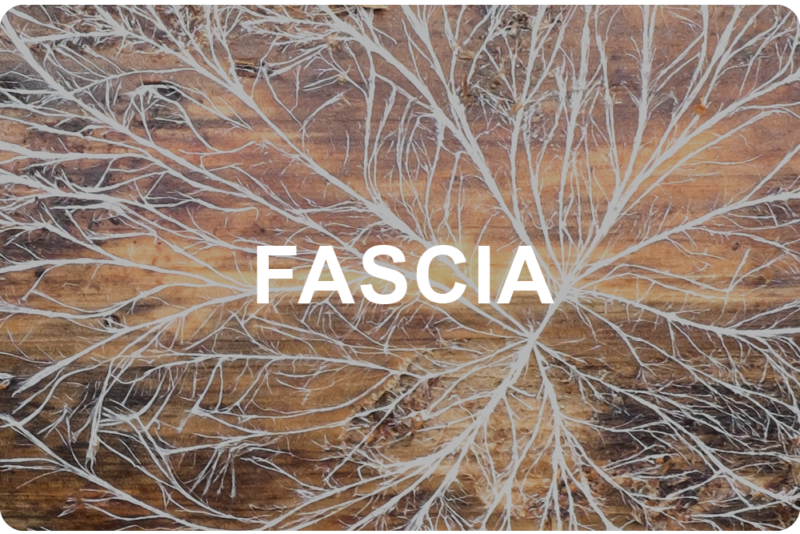 fascia-e1525187956549.png
