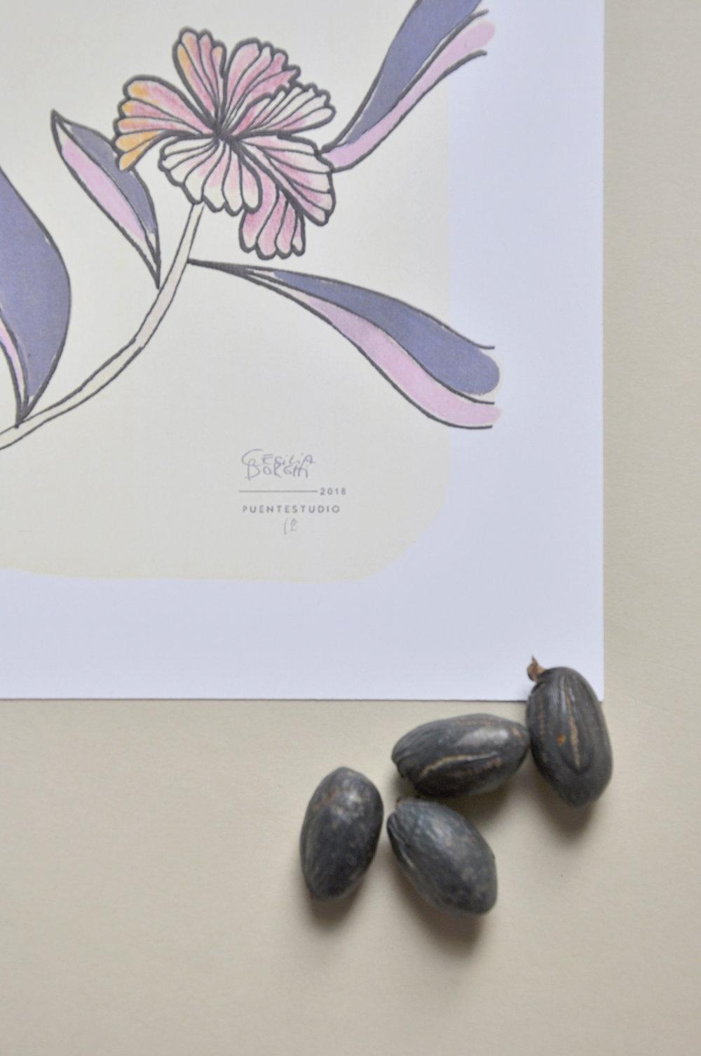 ceciliaborghi_puentestudio_magnolia6.jpg