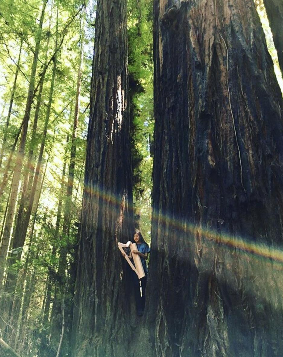 Save the Redwoods Tour