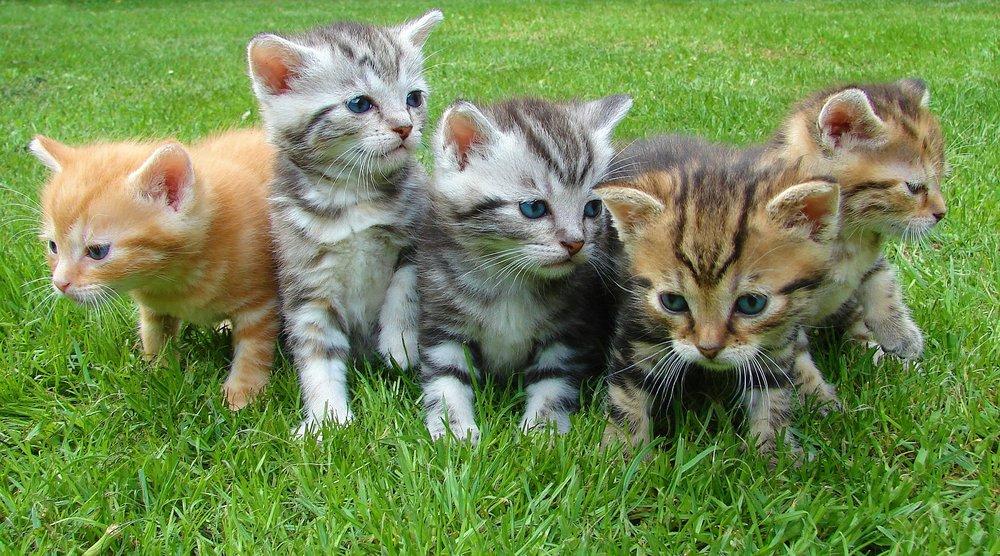 Animal shelter - kittens