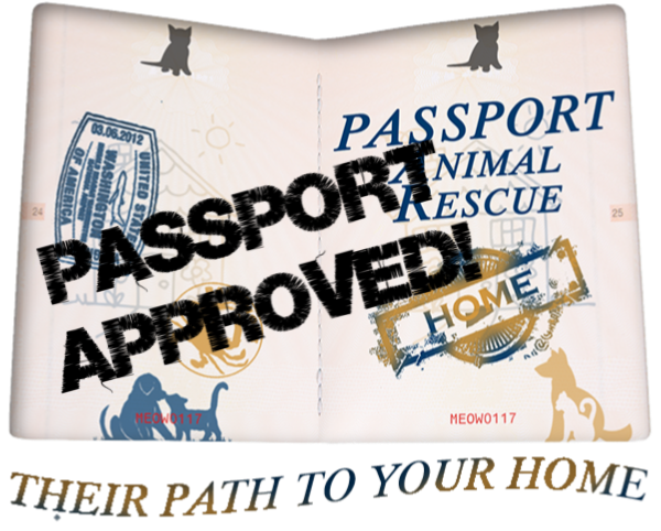 1 Passport Approved.png