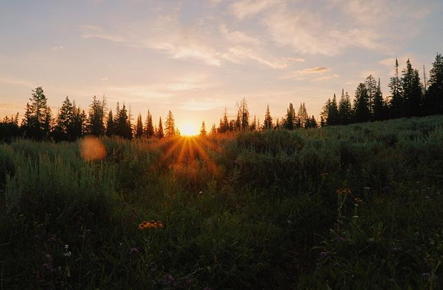 We like our mornings like we like our eggs: sunny side up 🍳  #darwinranch #sunnysideup #sunrise #wilderness #nature #outdoors #forest #wyoming #thatsWY #visitwyoming #mountains