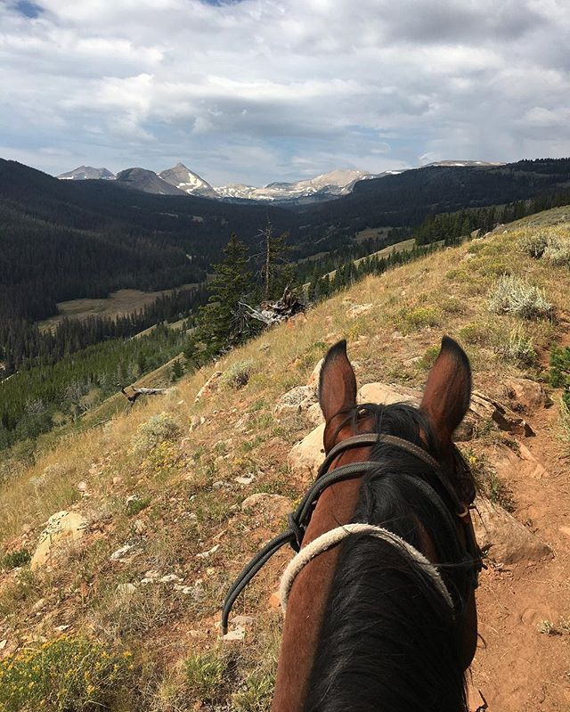Butch approves of this view. 🏔  #darwinranch #wyoming #horses #horseriding #mountain #views #outdoors #nature #wilderness #cowboy #grosventre
