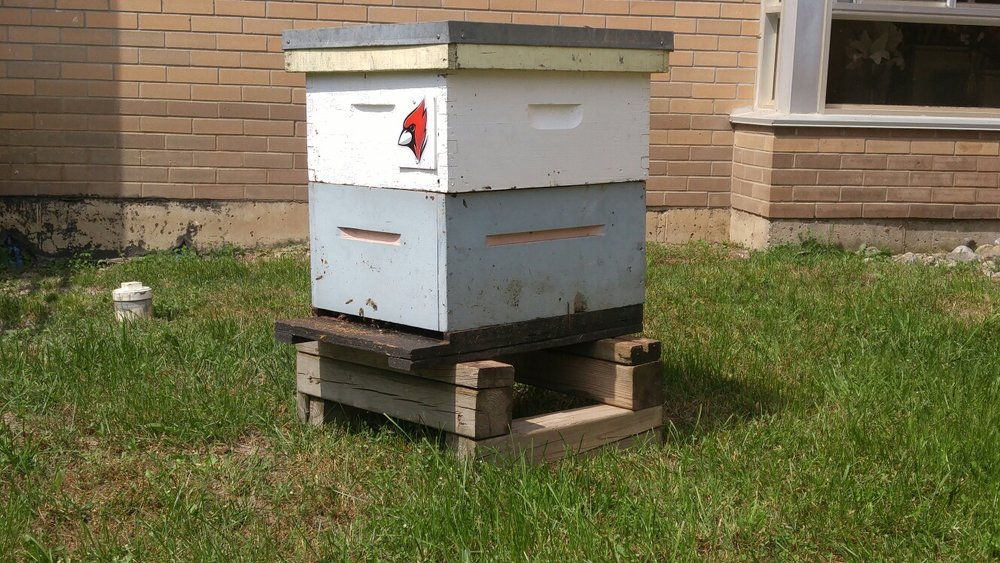 Grove Park Home's first beehive set up on the institution's campus.  Source: Travis Durham
