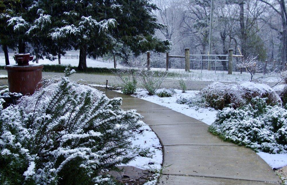 March 12, 2017 SNOW in Prosperity, SC!