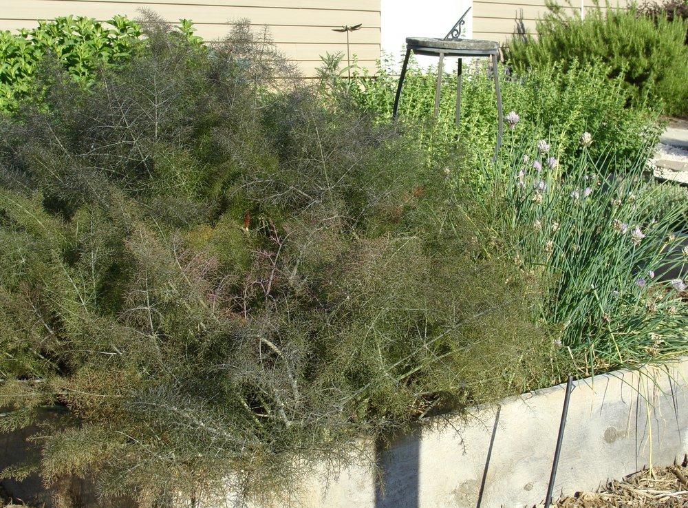 kitchen herb garden - Green Pastures Farm