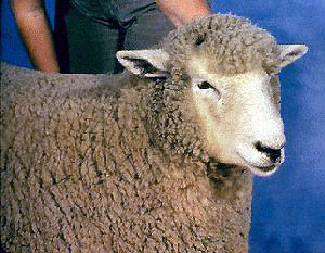 photo courtesy of Dr. Jerry Fitch, Extension Sheep Specialist, Department of Animal Science, Oklahoma State University