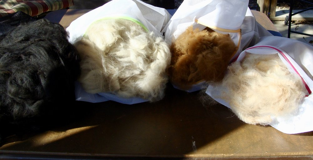 raw alpaca fleeces