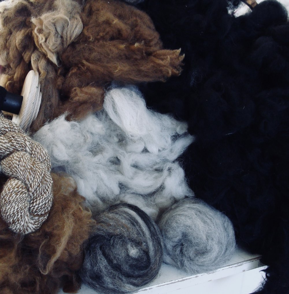 Washed Alpaca Fleeces