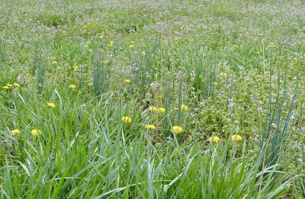 meadow @ green pastures farm