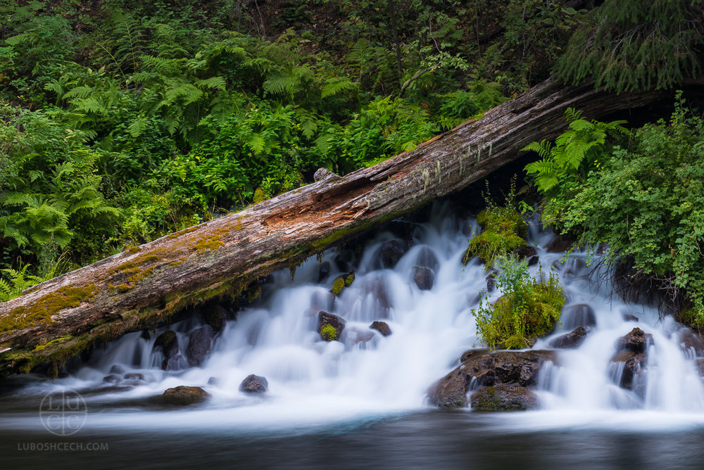Metolius River, Oregon (2017)