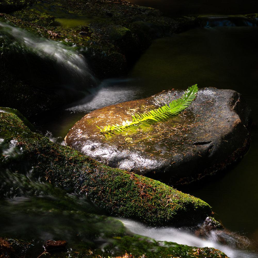 d-creek-04014.jpg