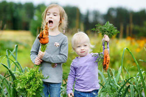 Growing isn't just for adults! - Kids will experience all of this in our two farm-to-table gardens growing on our 40 acre farm. Come join us in the fresh air and sunshine for a week your child won't forget.