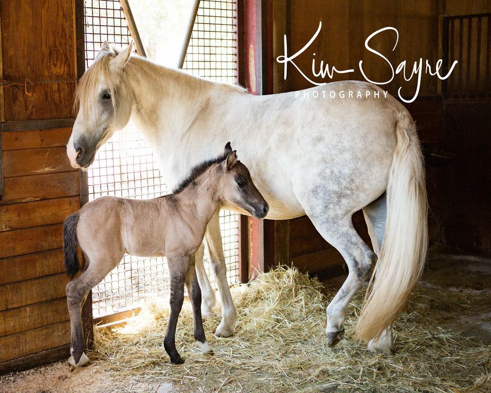 (c)2017-KimSayre-AN-Rancho-Toledano-Foal-005.jpg