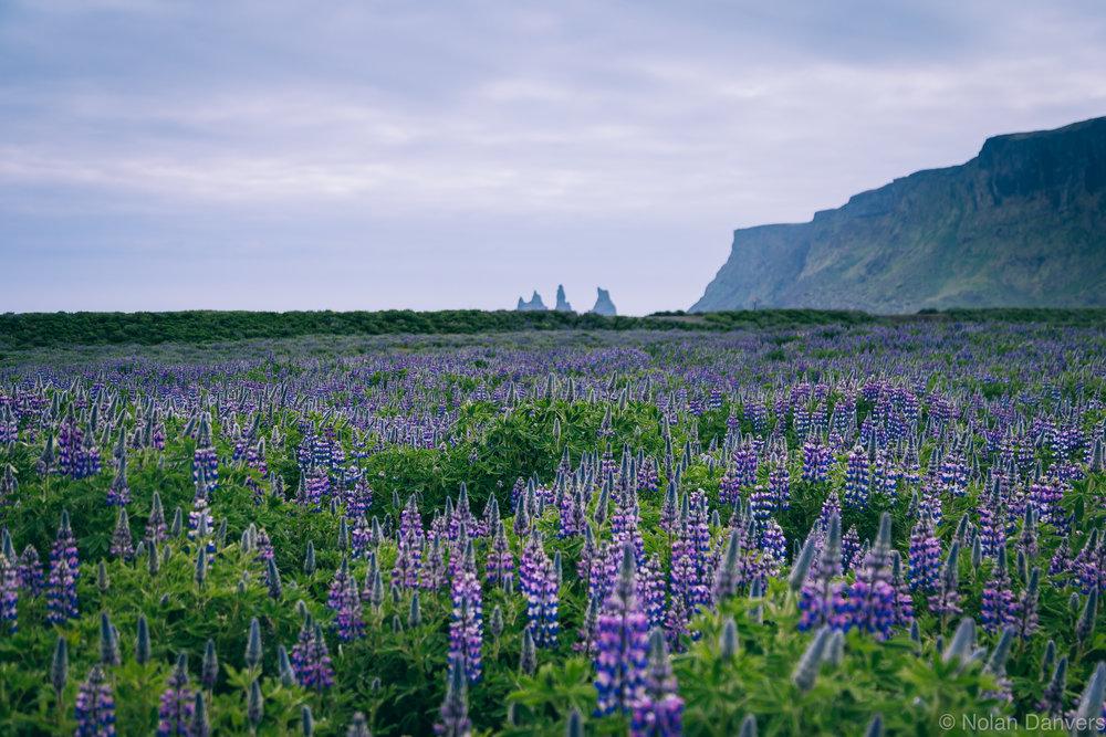 Iceland_2016-542 copy.jpg