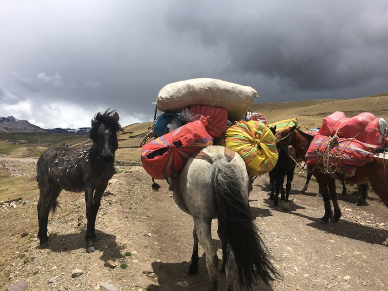 Our trusty porters getting our gear and food to camp