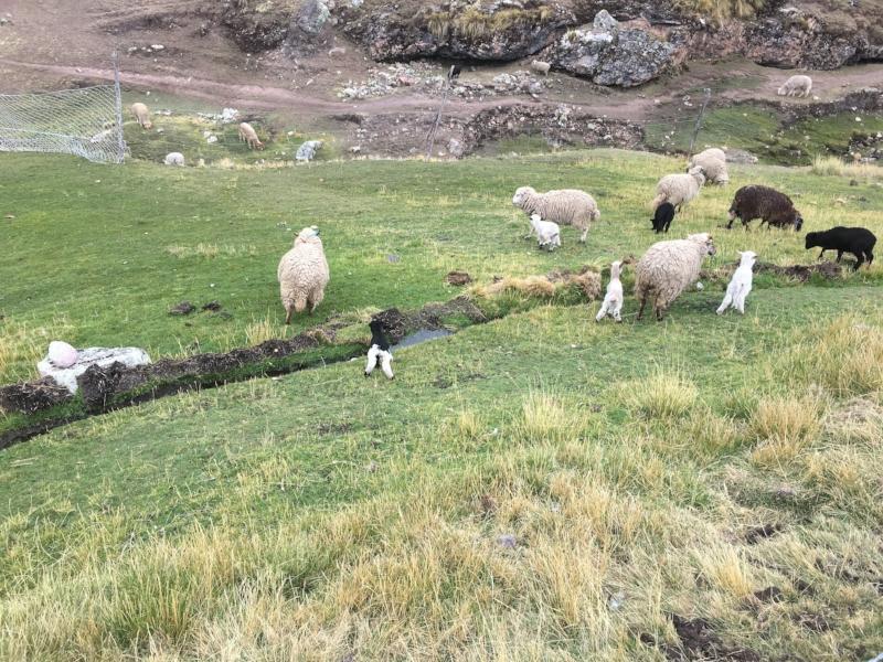 animals-ausangate-trek