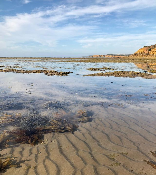 Low Tide • Making for a magical morning walk at cosy corner x #homebeing #beachwalk #lowtide #beachmornings #walking #ocean #rockpools #seascape #sky #happiness #iphonex