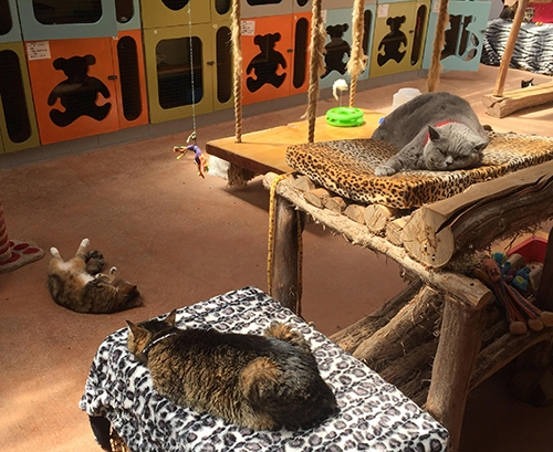 3-cats-lazying-cropped.jpg
