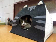Willow checking out one of the new cat igloos.