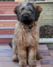 This young fellow (Wilson) has driven down from Christchurch to stay with Lisa at Orokonui Paws Inn because we and he rate it so highly.