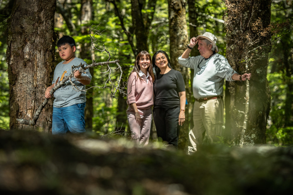 Ancient Beech Forest - Perfect for professional family portrait photographs