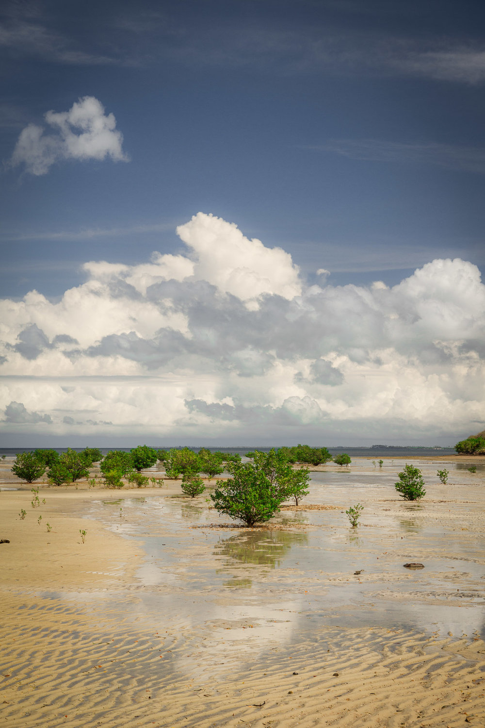 Mangroves on the north-east side of the island.