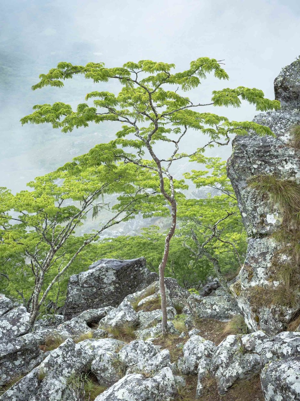 Lone Tree Chimanimani