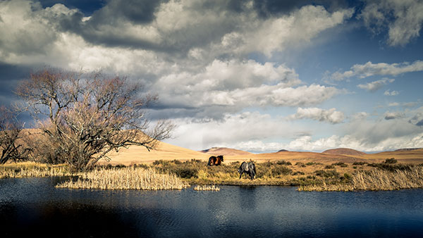 Basotho Horses take a drink near Jonathan's Lodge, Sehlabathebe National Park.
