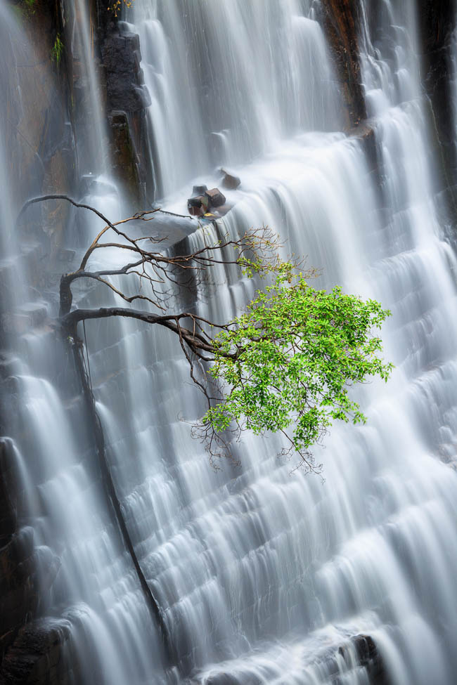A lone tree fighting for survival against the force of the falls.