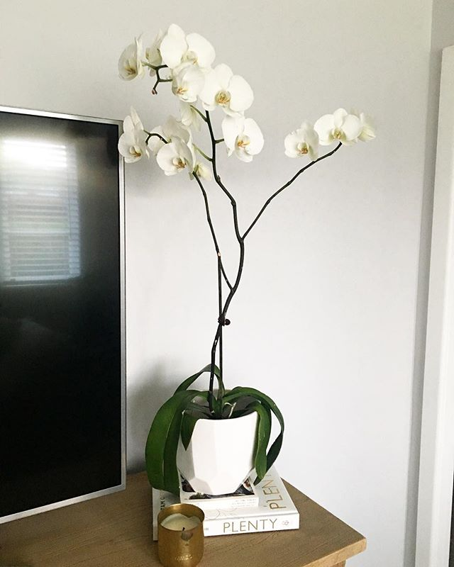 Orchids are my favorite plant to soften a room | They last so long and require minimal attention 🖤 . . . . . #RADdesign #design #interiordesign #homedecor #home #DIY #renovation #reveal #orchid #inspiration #Interior #crisp #modern #inspiration #room #crisp #clean #glass #flower #green  #white