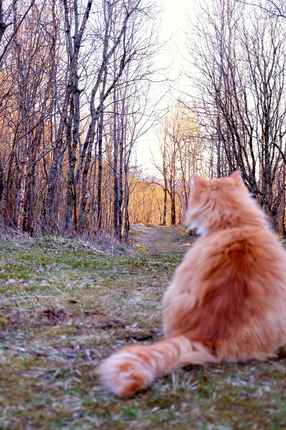A sunset walk together with our cat..