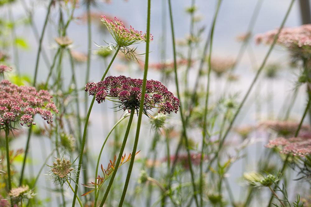 wild-blooms-glandore.jpg.jpg