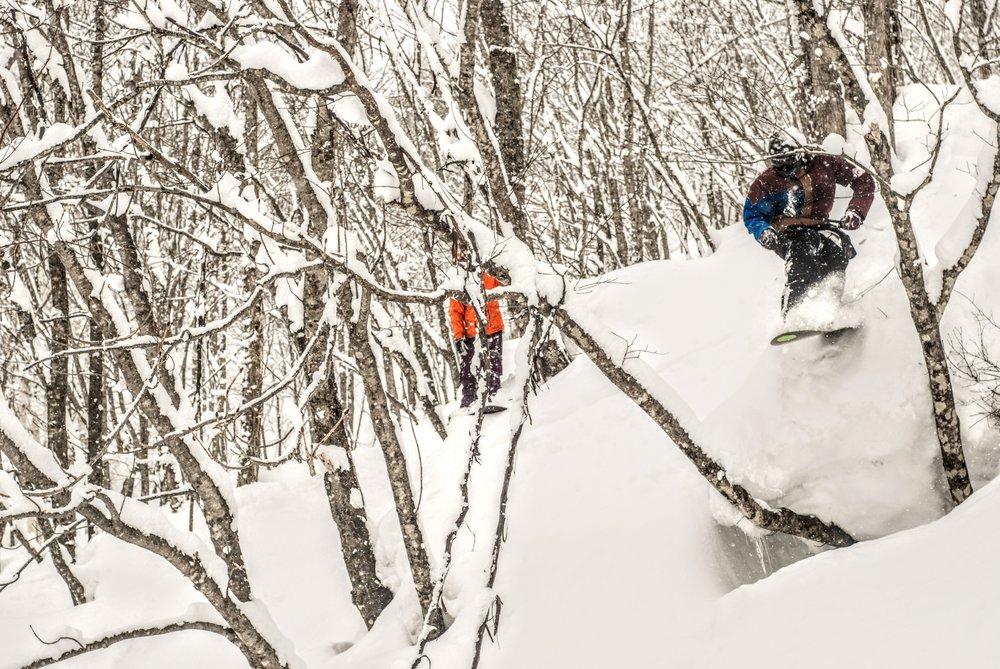Daniel Curtis dropper mellem to træer