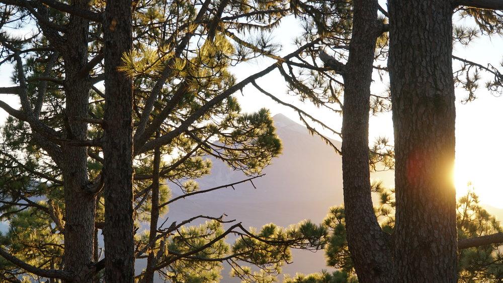 Teide kommer tættere og tættere på, og kan skimtes mellem træerne