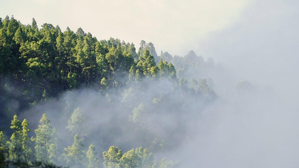 I grænsen mellem skov og sky-havet