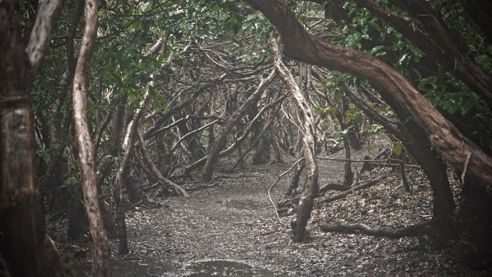 De eventyragtige skove i Anaga er bestemt et besøg værd!