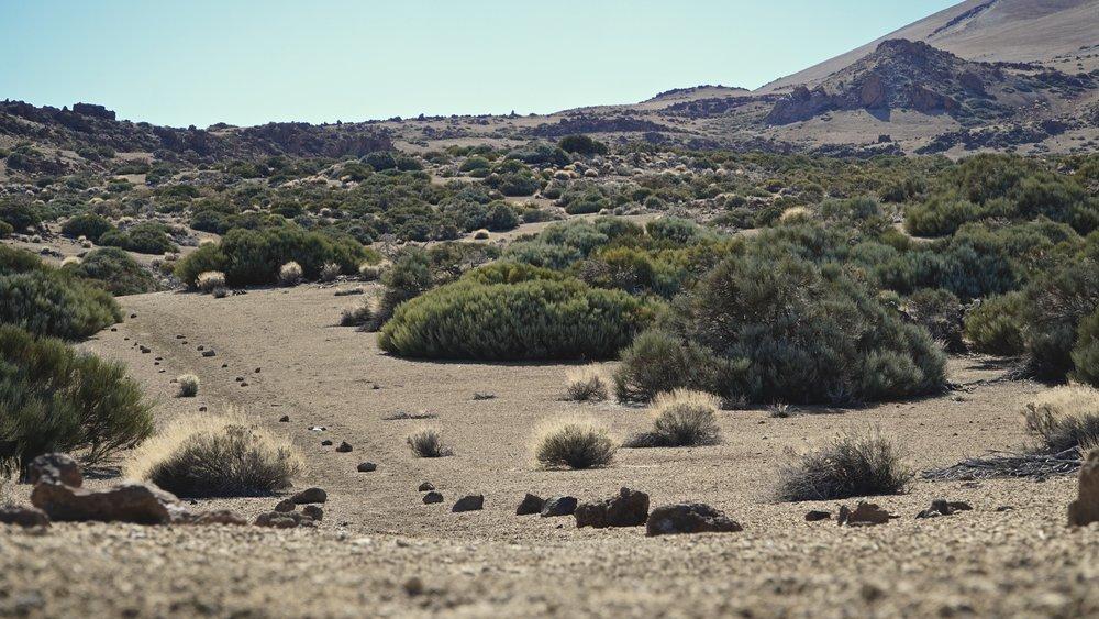Velmarkerede stier i området for foden af Teide