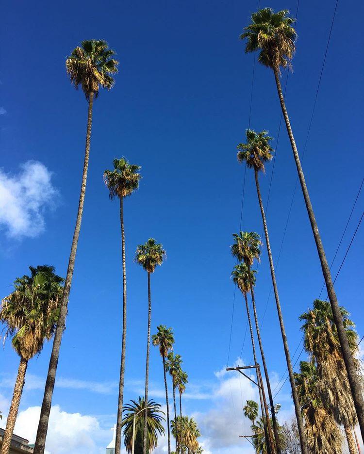 Hollywood 13.jpg
