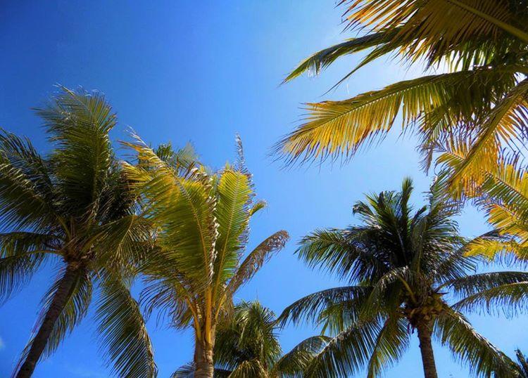 Playa Del Carmen 2.jpg