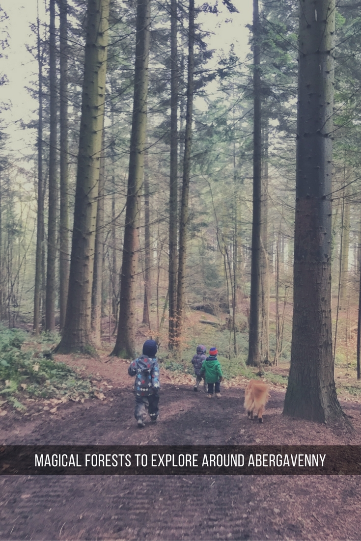 Magical forests to explore in Abergavenny