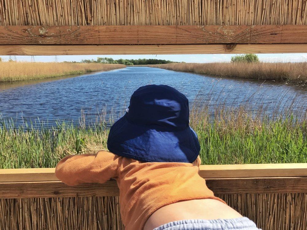 Newport Wetlands1.jpg