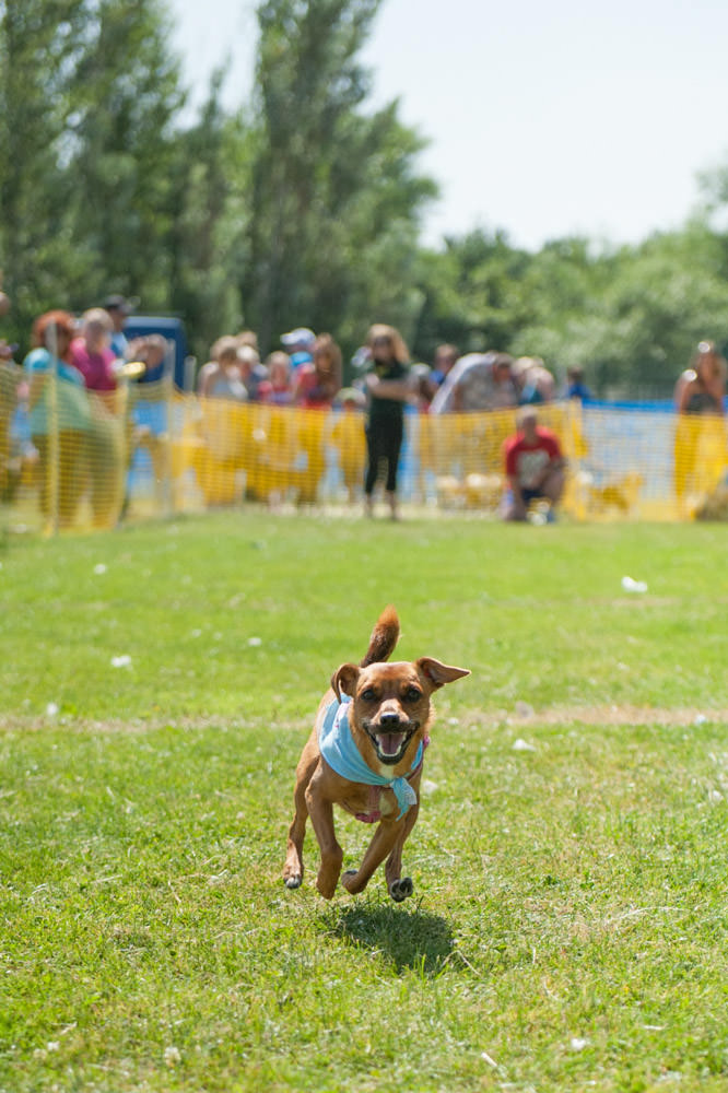 Dogs Trust Fun Day - Strathclyde Country Park - 21 July 2013