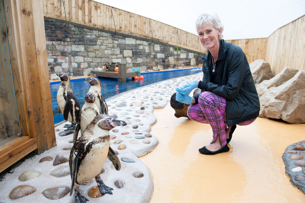 Judy Murray visits her namesake penguins at St Andrews Aquarium, 1st August 2013. The four Humboldt penguins were named Andy, Judy, Kim and Shirley after the Wimbledon champion's clan. © Julie Broadfoot - www.juliebee.co.uk