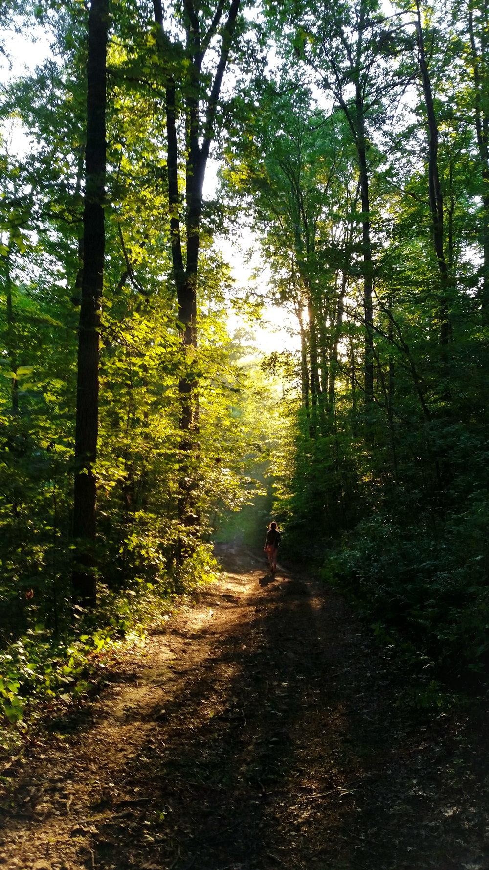 Morning Path 3.jpg